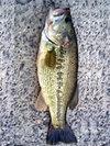 bass_01